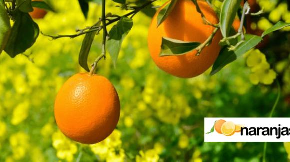 De lo tradicional a Naranjas Online