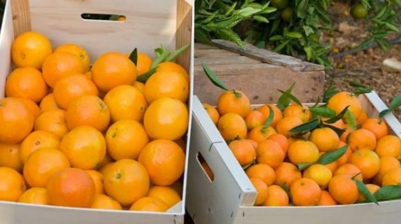 Propiedades de las naranjas